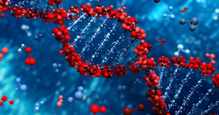 Genes,Obesity