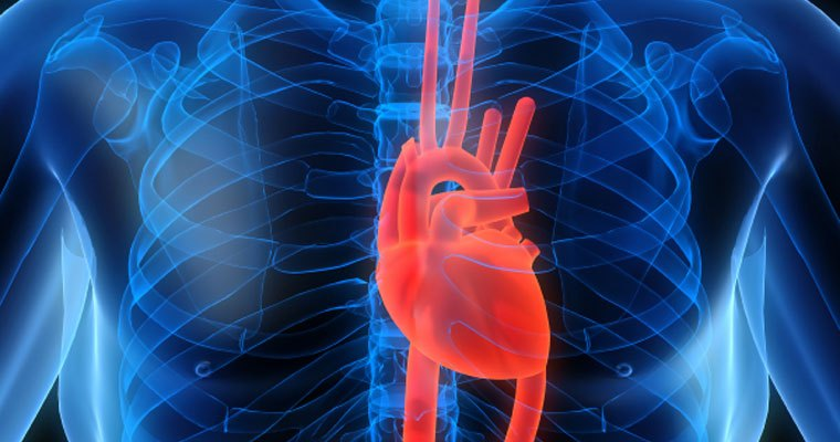Cardiovascular diseases myths